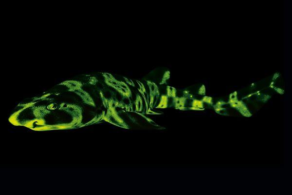 squali-luminosi
