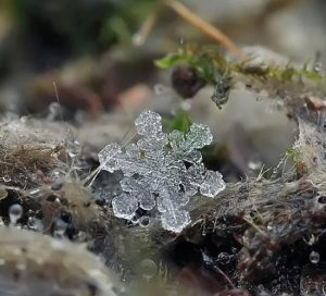 fiocchi-di-neve