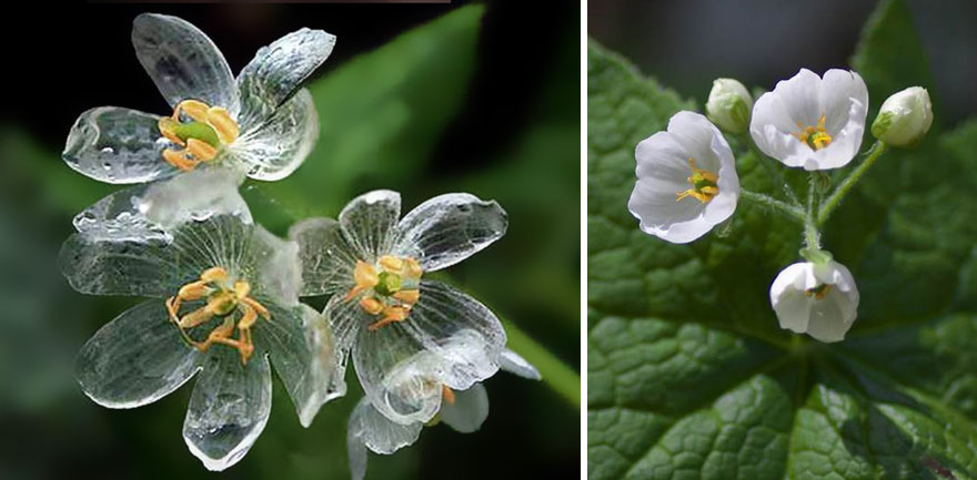 skeleton flower